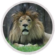Beautiful Face Of A Male Lion With A Thick Fur Mane Round Beach Towel