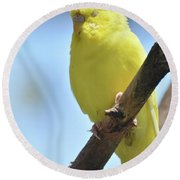 Beautiful Face Of A Yellow Budgie Bird Round Beach Towel