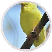 Beautiful Face Of A Yellow Budgie Bird Round Beach Towel