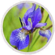 Beautiful Flower Iris Round Beach Towel
