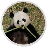 Beautiful Giant Panda Eating Bamboo From The Center Round Beach Towel