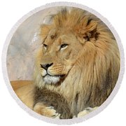Beautiful Golden African Lion Relaxing In The Sunshine Round Beach Towel