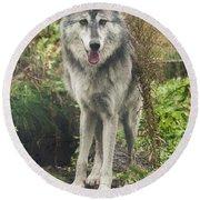 Beautiful Gray Wolf Round Beach Towel
