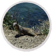 Beautiful Ground Squirrel Standing At The Edge Of The Coast Round Beach Towel