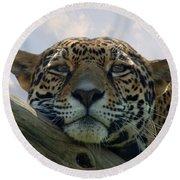 Beautiful Jaguar Round Beach Towel