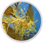 Beautiful Leafy Sea Dragon Round Beach Towel by Brooke Roby