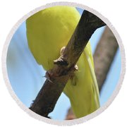 Beautiful Little Yellow Budgie Bird In Nature Round Beach Towel