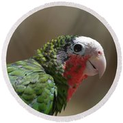 Beautiful Look At At The Profile Of A Conure Parrot Round Beach Towel