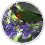 Beautiful Lorikeet Round Beach Towel