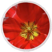 Beautiful Macro Of A Red Blooming Tulip Round Beach Towel
