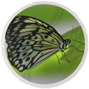 Beautiful Paper Kite Butterfly On A Green Leaf Round Beach Towel