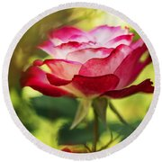 Beautiful Pink Rose Blooming In Garden Round Beach Towel