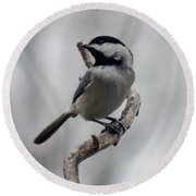 Beautiful Pose - Black-capped Chickadee Round Beach Towel