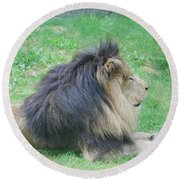 Beautiful Profile Of A Resting Lion In Green Grass Round Beach Towel