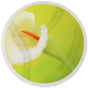 Beautiful Radiant Cala Flower On Decorative Background, Graphic From Painting. Round Beach Towel
