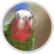 Beautiful Red Feathers On The Throat Of A Green Conure Bird Round Beach Towel