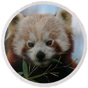 Beautiful Red Panda Round Beach Towel