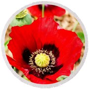 Beautiful Red Poppy Round Beach Towel