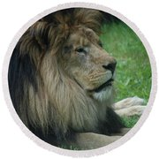 Beautiful Resting Lion In Tall Green Grass Round Beach Towel