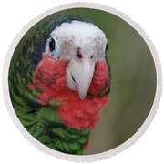 Beautiful Ruffled Green Feathers On A Conure Round Beach Towel