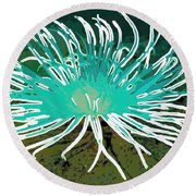 Beautiful Sea Anemone 2 Round Beach Towel by Lanjee Chee