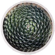 Beautiful Spiked Ball Plant Round Beach Towel