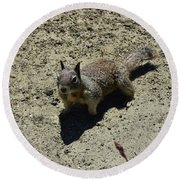 Beautiful Squirrel Standing In A Sandy Area In California Round Beach Towel