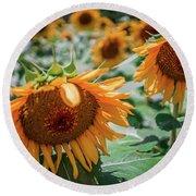 Beautiful Sunflower Field In South Carolina Round Beach Towel