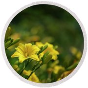 Beautiful Vibrant Yellow Lily Flower In Summer Sun Round Beach Towel