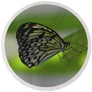 Beautiful White Tree Nymph Butterfly On  A Leaf Round Beach Towel