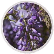 Beautiful Wisteria A Spring Delight Round Beach Towel