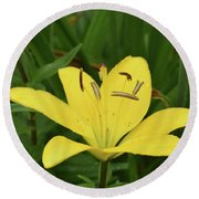 Beautiful Yellow Lily In A Garden During Spring Round Beach Towel