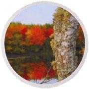 Beauty And The Birch - Nova Scotia Round Beach Towel