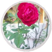 Beauty Of  Red Rose  Round Beach Towel