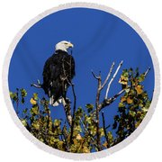 Beauty Of The Bald Eagle Round Beach Towel