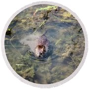 Beaver Spotted The Great Beaver Escape 01 Round Beach Towel