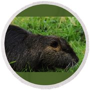 Beaver Whiskers Round Beach Towel