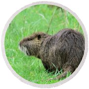 Beaver With Whiskers Round Beach Towel