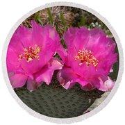Beavertail Cactus Flowers Round Beach Towel