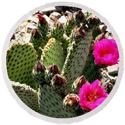 Beavertail Cactus Round Beach Towel
