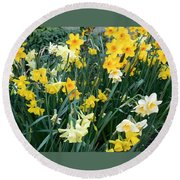 Bed Of Daffodils Round Beach Towel
