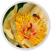 Bee And A Pale Yellow Early Glow Peony Round Beach Towel