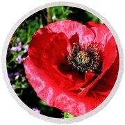 Bee And Red Poppy Round Beach Towel