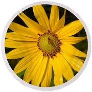 Bee And Yellow Flower Round Beach Towel
