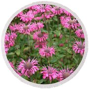 Bee Balm Beauties Round Beach Towel