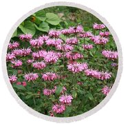 Bee Balm Garden Round Beach Towel