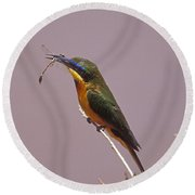 Bee Eater And Dragonfly Round Beach Towel