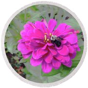 Bee Feeding From Pink Zinnia Round Beach Towel