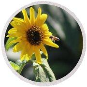 Bee Flying To Bright Lemon Yellow Wild Sunflower In High California Sun Round Beach Towel