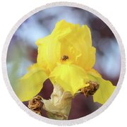 Bee In An Iris Bloom Round Beach Towel by Ann E Robson